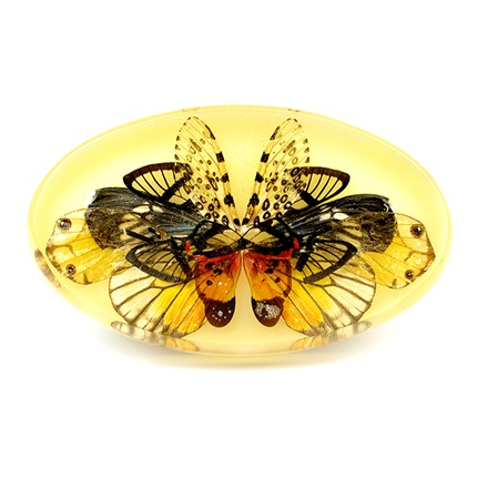 Brooch. Butterfly wings, cicada and moth, resin and silver.